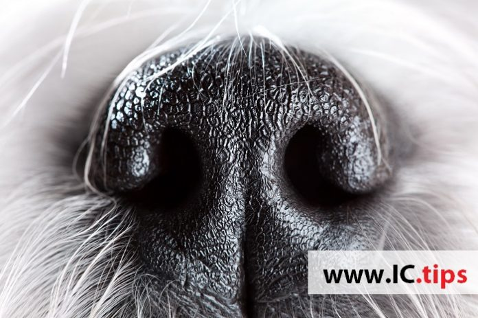 Isolation of Methicillin Resistant Staphylococcus aureus from the Oral Cavity of Companion Dogs