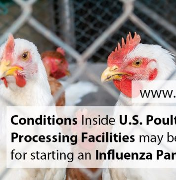 Conditions Inside U.S. Poultry Processing Facilities May Be Ideal For Starting An Influenza Pandemic