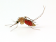 Malaria, Mosquitoes and Man: Prevention & Control
