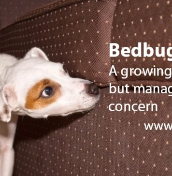 Bedbugs A growing, but manageable concern