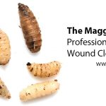 The Maggots: Professional Wound Cleaners